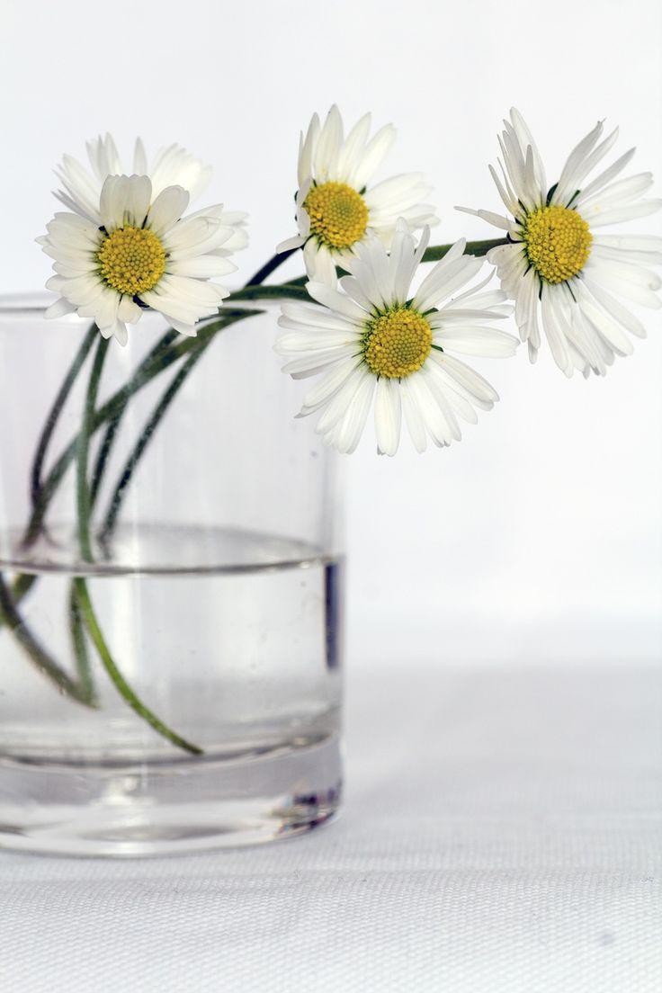 flowers, daisies, vase