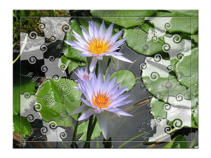 Frame photo editor 5 0 2 incl serial sweee2 ttm