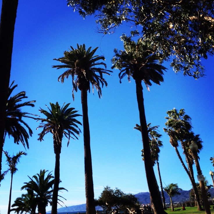 Palmtrees in Hollywood!