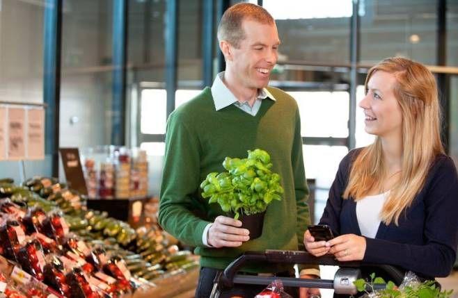 Menu Wędrowca Starego  i nie tylko.: Dlaczego zioła z supermarketów tak szybko usychają...