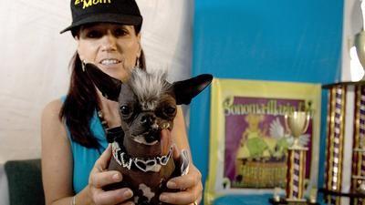 Nov 30, 2013 Chicago Tribune - 'World's ugliest dog' Elwood dies