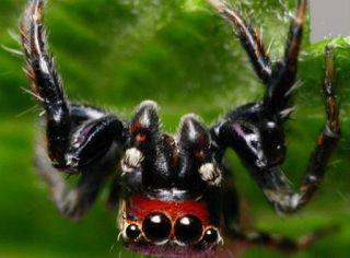 Planet Stars: Το δηλητήριο της αράχνης «μυστικό» για τη θεραπεία...