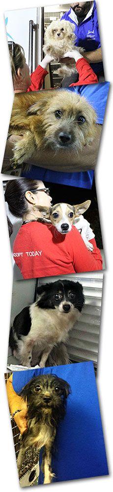RESCUE ALERT: Puppy Mill Rescue - 88 Dogs Saved - North Shore Animal League America