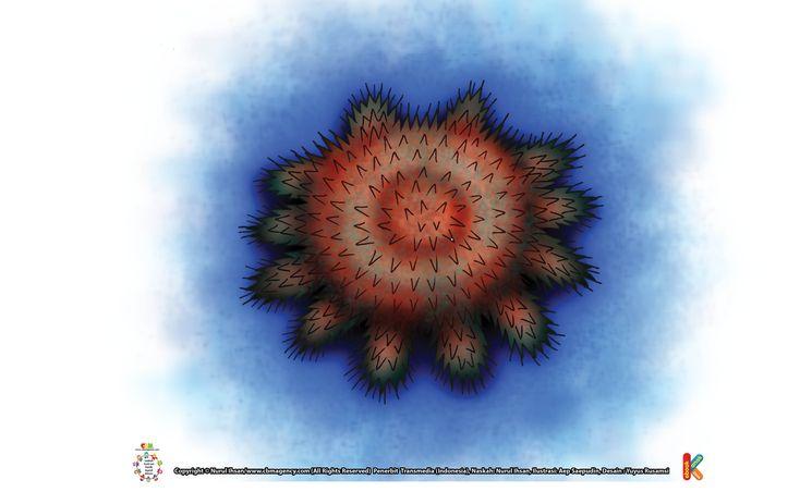Bintang Laut Mahkota Duri Bertelur 1 Milyar