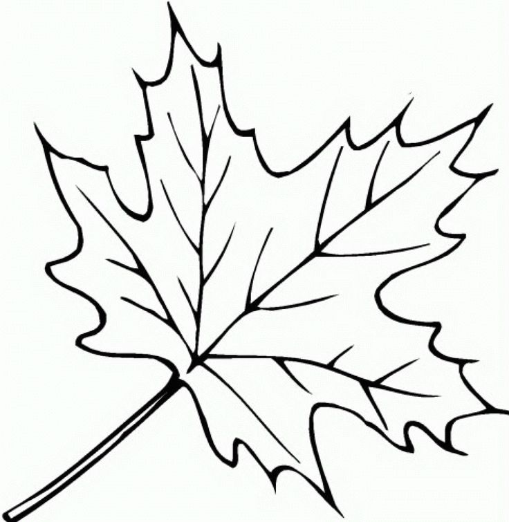 simple leaf colouring pages google search - Simple Coloring
