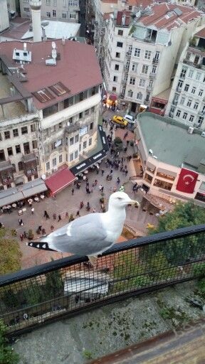 Seagull is on the Galata Tower in İstanbul