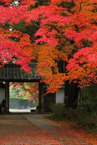 Ryotan-ji temple, Kyoto, Japan