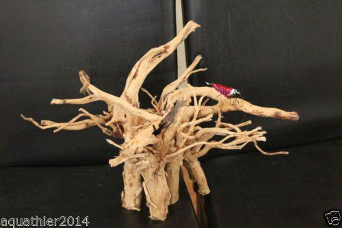 Mangrovenwurzel-XL-Nr-13-Holz-Natuerlich-Echt-und-Wurzel-AquaThier