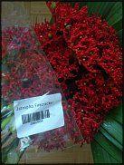 ятрофа www.floristic.ru - Флористика. Помогите!!!!!