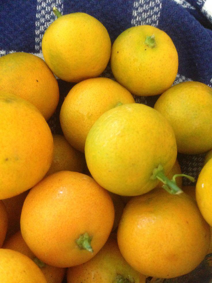 Firm, ripe Kumquats