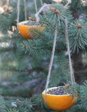 hol een sinaasappel uit en doe er vogelzaad in hang het in de boom en de vogeltjes zijn blij