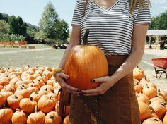 Pumpkin patch pictures.