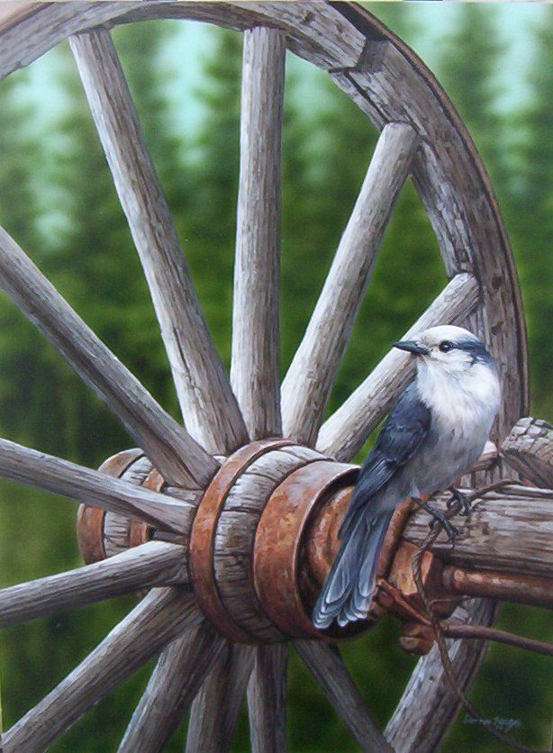 """Darren Haley - """"Whiskeyjack (Canada Jay)"""". These large, brave birds are a staple at mountain picnic tables, looking for a handout or an opportunity to pilfer a morsel."""