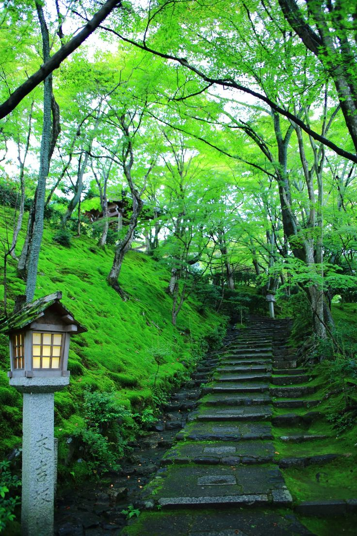 Jyojakko-ji Temple, (Japan, Kyoto) fresh green, blue maple, moss nature. 京都 常寂光寺 末吉坂 青もみじ 苔