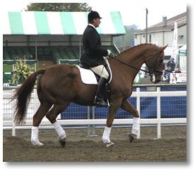 17 Best images about Horse seat, balance, cues, exercises ...