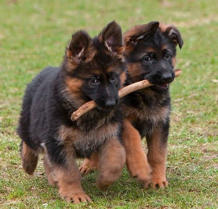 Two buddies playing