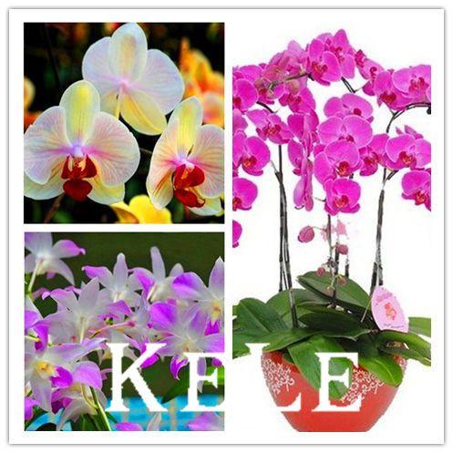 Купить 10 шт. бабочки орхидеи, 19 разновидностей красивой бонсай цветок, Старший декоративные орхидеи растения, # T9v1bzи другие товары категории Карликовые деревьяв магазине keleyou's storeнаAliExpress. семена многолетних и семян семейной реликвии