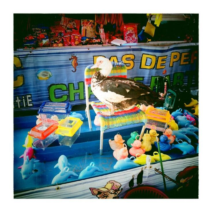 """15 août 2013 / Pêche aux canards (""""supervisé"""" par un vrai canard) à Pont-sur-Yonne (89) #yonne"""