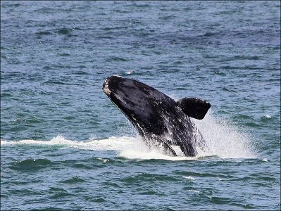 Cape Town is, without a doubt, one of the most beautiful cities in the world. It offers a variety of activities, but beyond her borders there are loads of fun day trips too. Whale watching