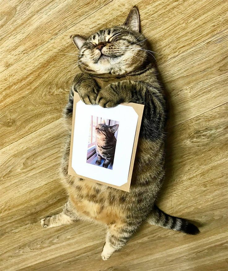 this cat is in love with itself or it is so happy to have a picture of itself - isn't it so weird to think that cats and dogs don't actually know what they look like , like when they look in a mirror cats often think it is another cat and my dog just thinks it's like a tv and ignores it