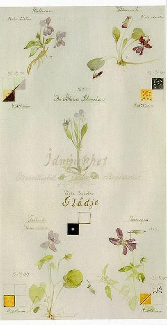 Hilma af Klimt, Outline of Violets, June-July 1919