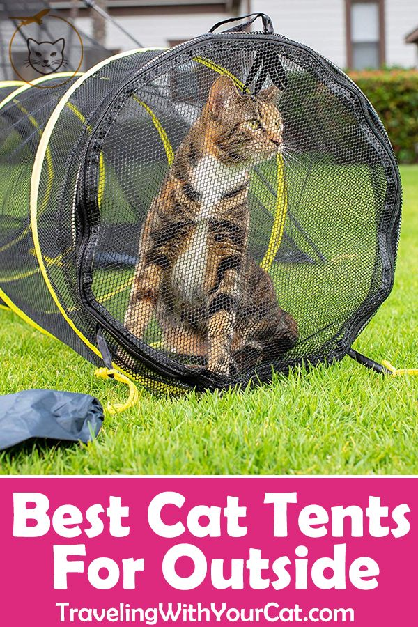 Best Cat Tents For Outside Cat Tent Cats Outside Outdoor Cats