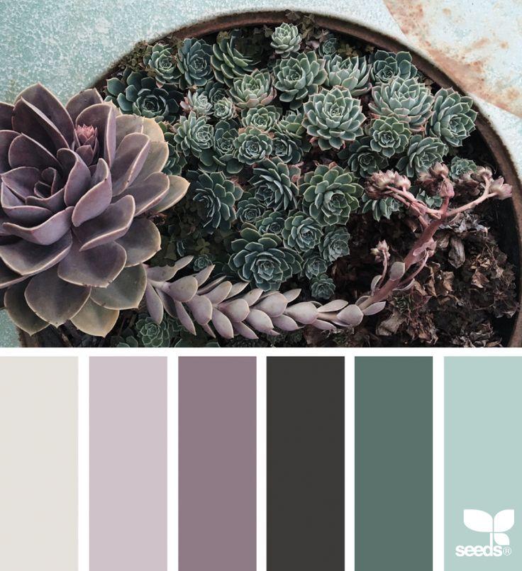 Succulent Hues | design seeds | Bloglovin'