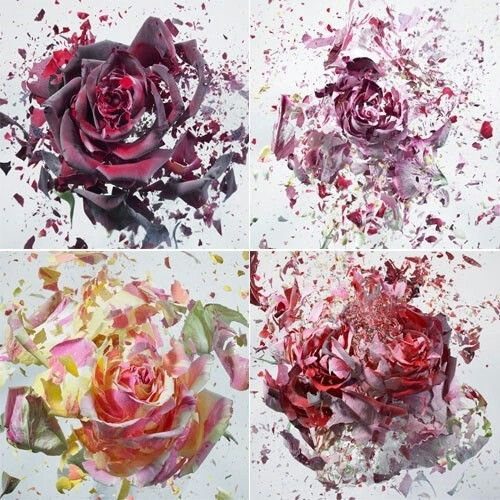 Shattering flowers dipped in liquid nitrogen and dried with an air gun. Slow motion.