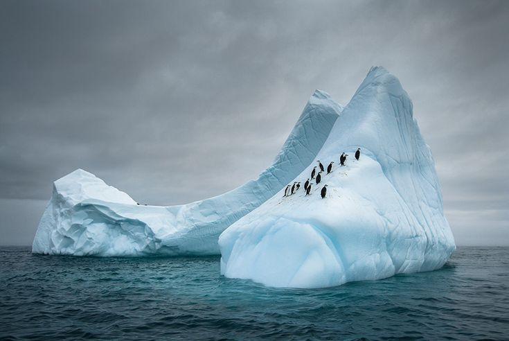 penguin-awareness-day-photography, image credits: Mariusz Potocki