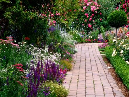 Scent is an essential part of the yard and garden, and an area filled with scented plants will always be enticing. The scented elements of this border are roses and lavender.