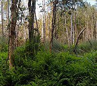 Walk with Balto at Karawatha Forest (20 min drive)