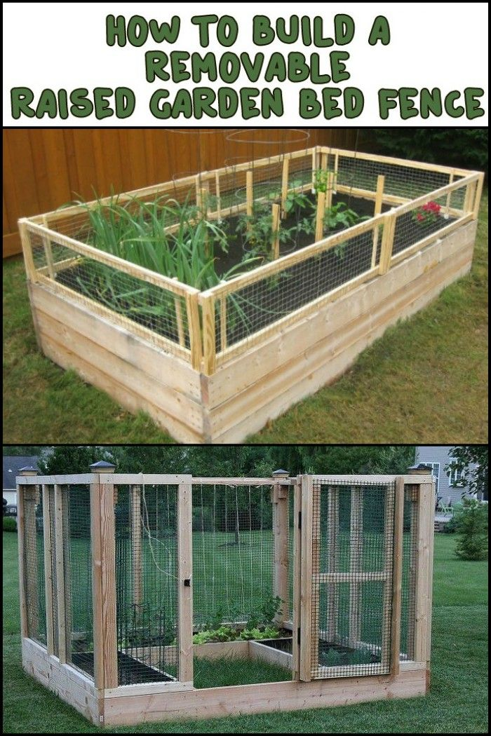 Best 25 Raised Bed Fencing Ideas On Pinterest Raised Bed Building Raised Garden Beds And