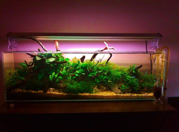 ... images about aquariums on Pinterest Small fish tanks, Aga and Fish