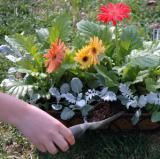 Is There a Difference Between Potting Soil and Potting Mix?: Adding Soil After Watering
