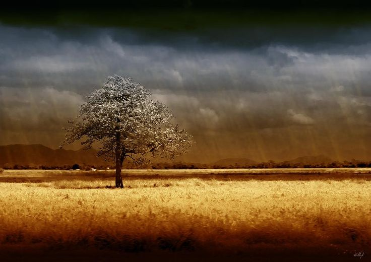 And The Rains Came Photograph by Holly Kempe