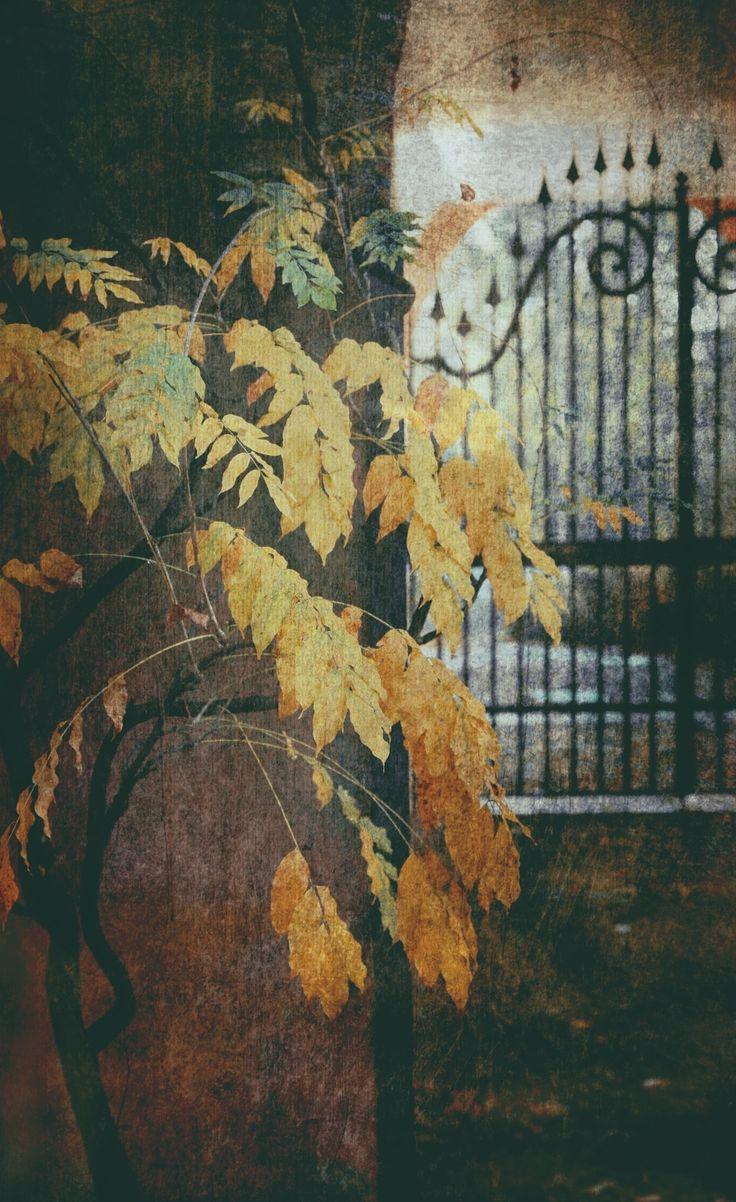 Autumn mood - null
