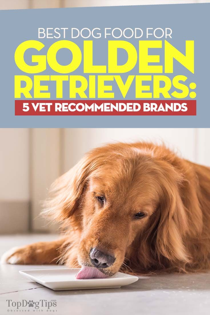 Best Dog Food For Golden Retrievers 5 Vet Recommended Brands