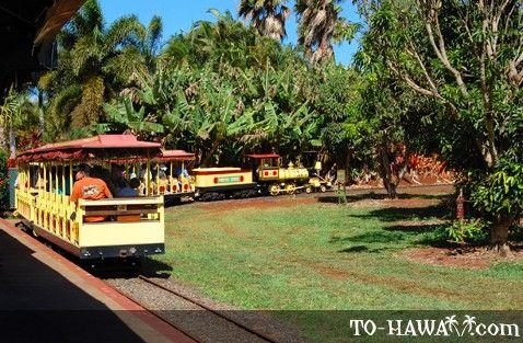Dole Pineapple Farm Oahu | Dole Plantation on Oahu, Hawaii