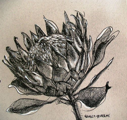 Title: Protea 2 Medium: Mixed media on paper: Pen and ink/graphite Size: 200mm x 195mm