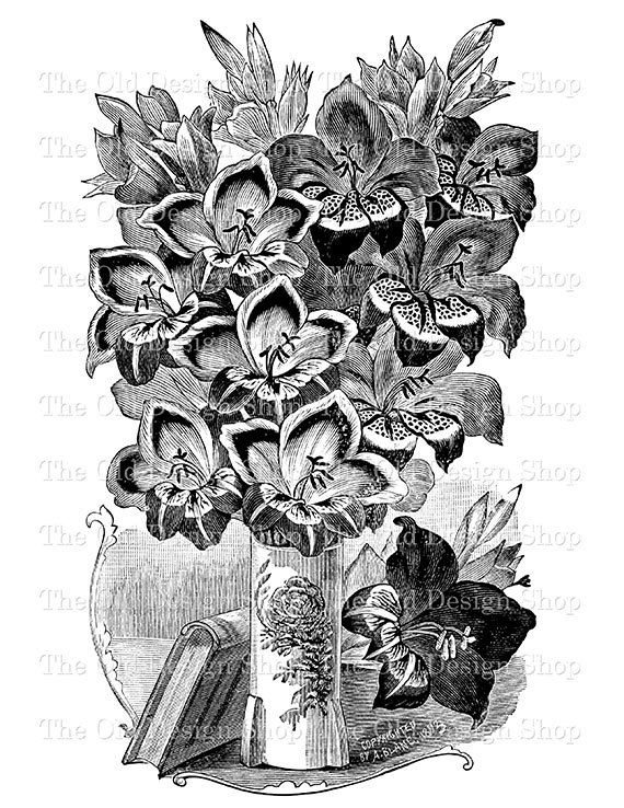 Gladiolus Bouquet Printable Vintage Clip Art by TheOldDesignShop