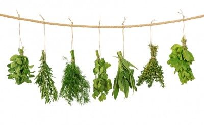 Easy Homesteading: How To Dry Herbs – Various Methods