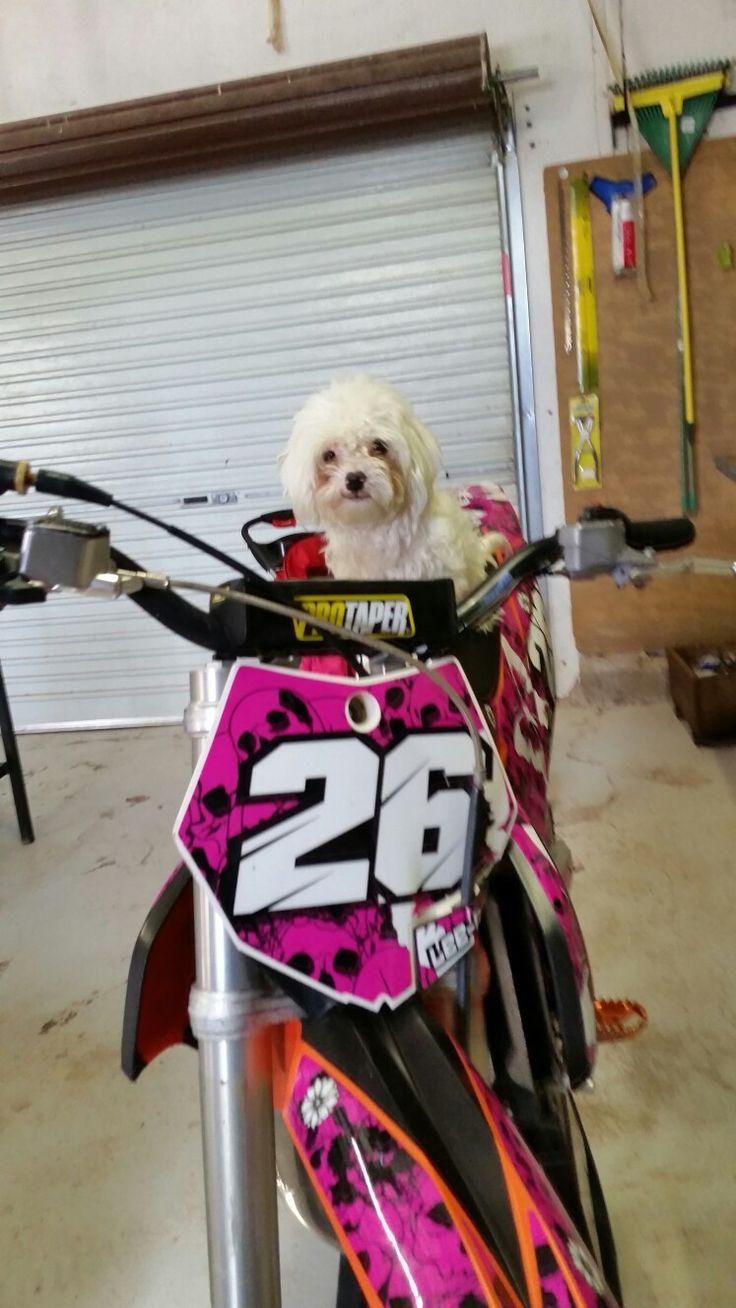 Motocross Dog
