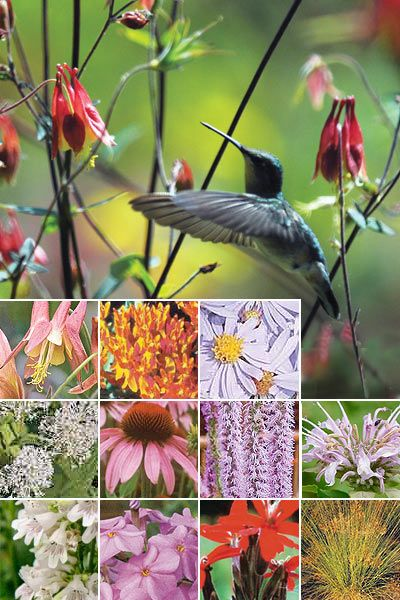 Hummingbird garden plants.../click to see