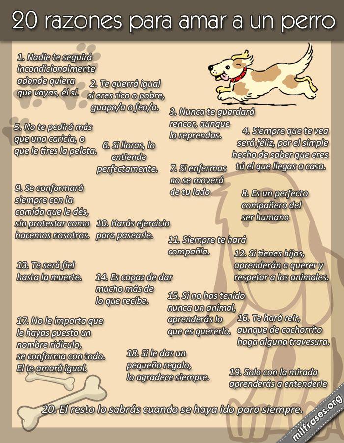 20 razones motivos para amar a un perro, perros cariñosos, frases de perros, como educar a tu perro