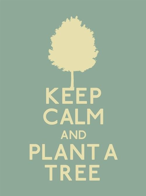 When was the last time YOU planted something? #IndoorLandscaping #ScottsdaleAZ http://qoo.ly/gq282