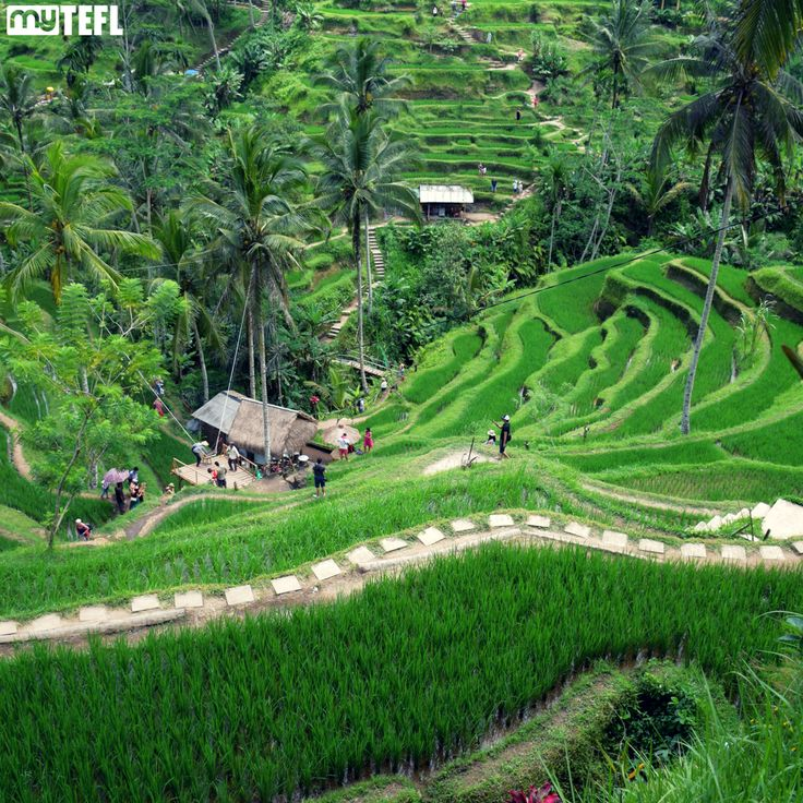 Ubud is just one of the amazing places you can visit while weekending in Bali. It's got verdant rice paddies and mystical Hindu temples, all wrapped up with hip vegan bars, enthralling art galleries and taste-bud-tingling Indonesian warung taverns. #Ubud #Indo #Indonesia #travel #explore #Asia #TEFL #TESOL #Teachabroad #TEFLlife #TEFLtravel #Travelgram #ttot #whereto #adventure #adventuresabroad