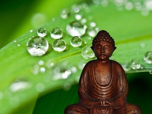 Meditation: An Introduction for Stressed Out Control Freaks.