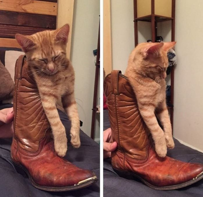 TOP 50 Funny Cats Pictures