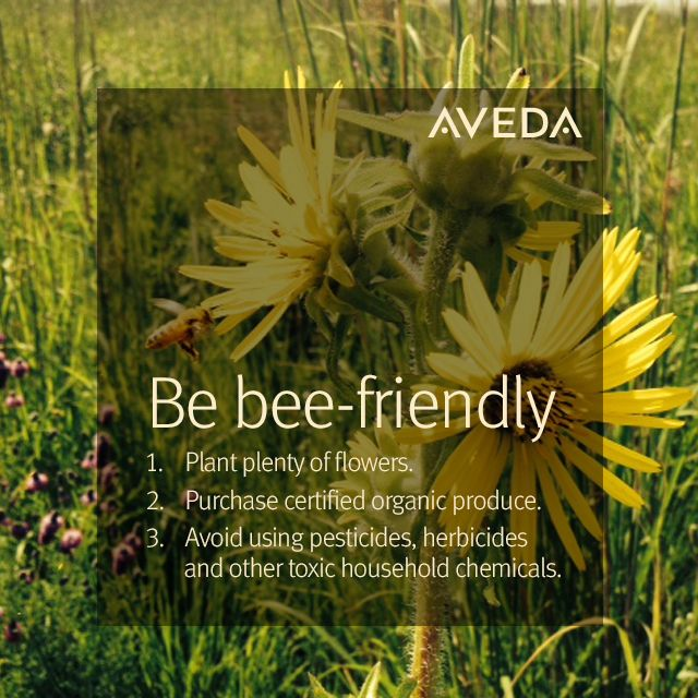 Be bee-friendly with these easy tips to protect #pollinators. #AvedaMission