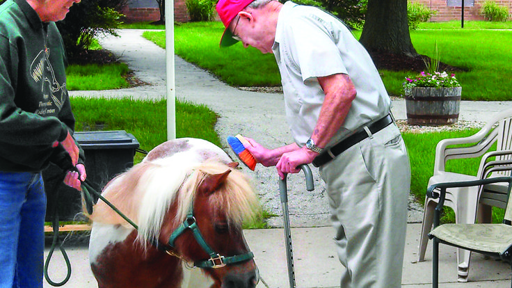 Therapy Miniature Horse Association | Horse therapy